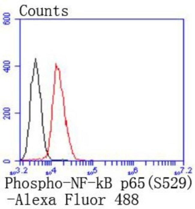 RelA/NFkB p65 NLS (p Ser526) Rabbit anti-Human, Clone: SP07-00, Novus Biologicals